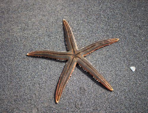 Starfish Country